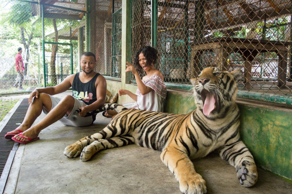 Phuket Tiger Kingdom | www.andthentherewasfood.co.za